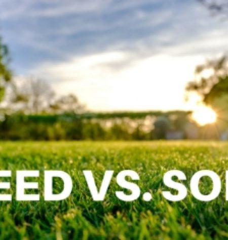 SEED VS SOD