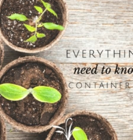 Cotainerplanting